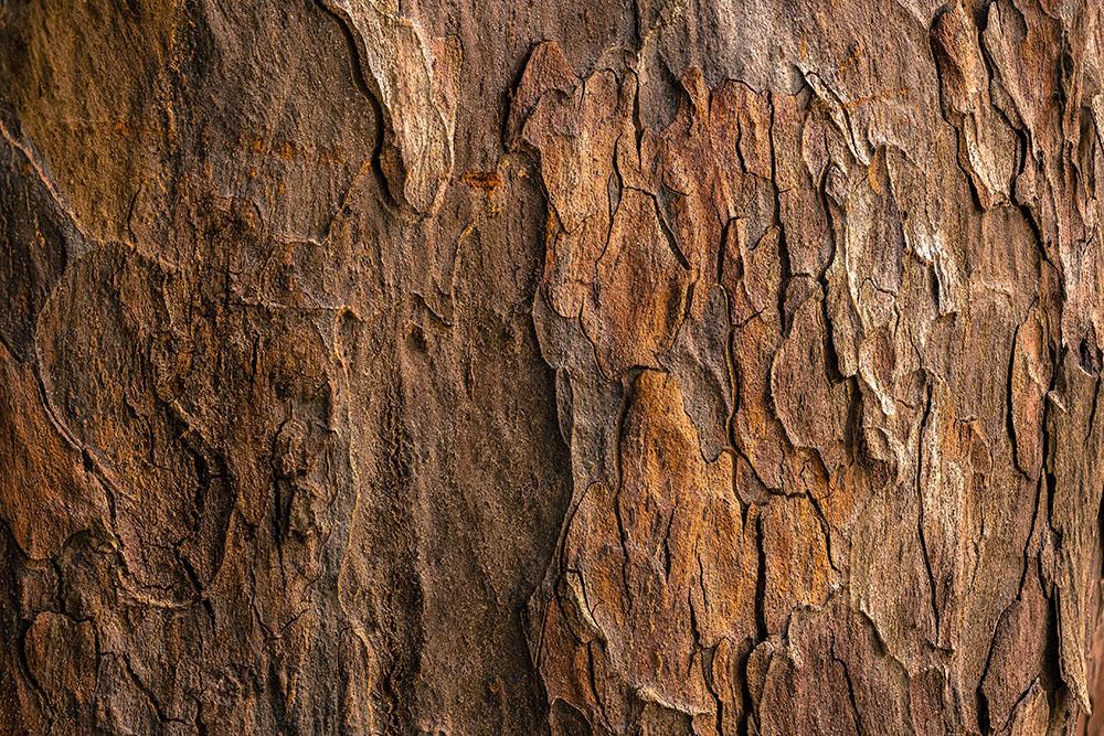 Identifier un arbre grâce à l'écorce