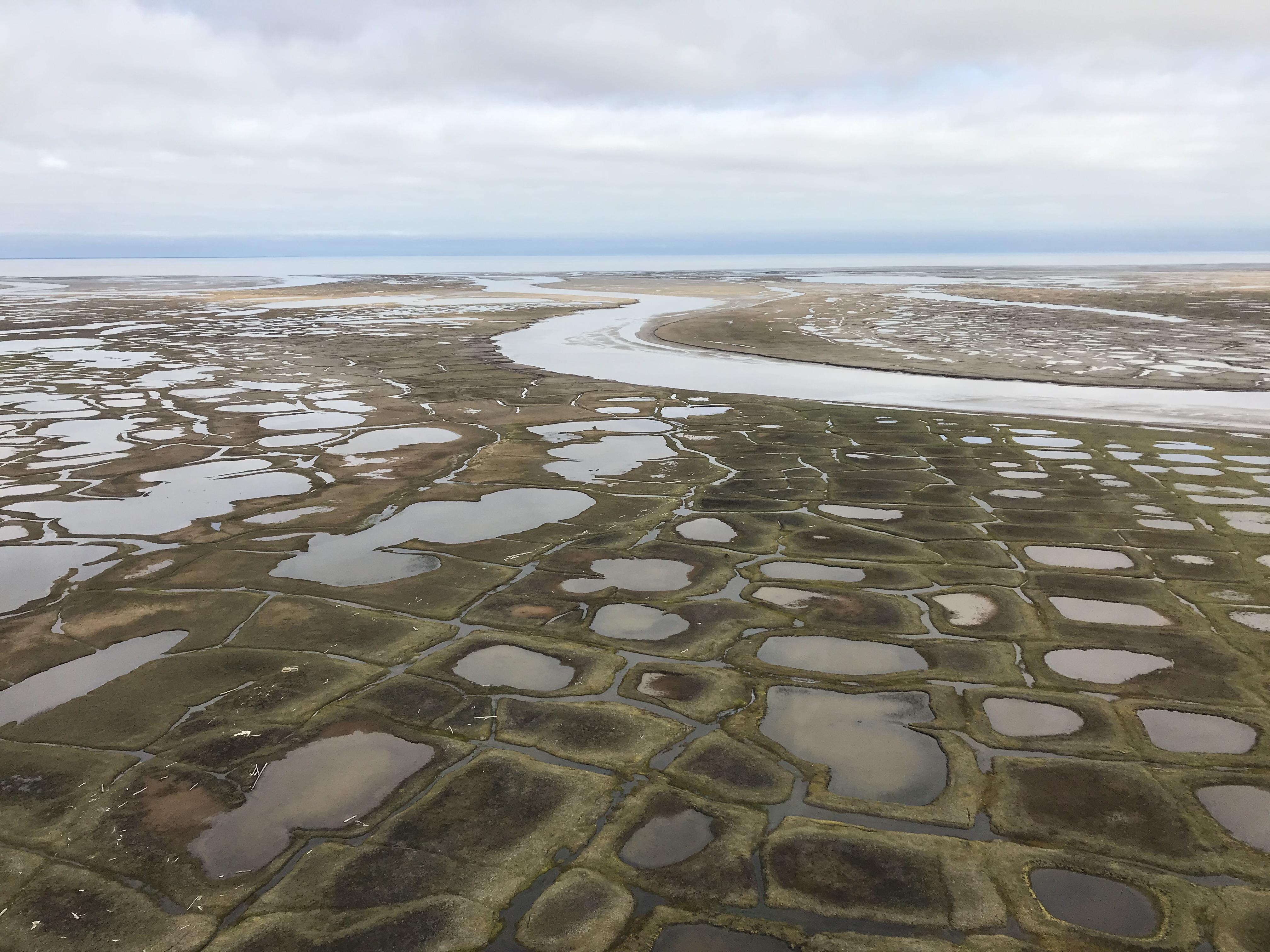 Ice wedge polygonal terrain in a permafrost coastal delta.