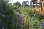Koniec czerwca w części owocowo-kwiatowej - po lewej brzoskwinia i morela, pomiędzy nimi świerk, zadarnione barwinkiem, obok małe kłosy dmuszka, łubiny, lilie, przegorzany, czasem irys, dalej czyściec, malwy, róże... a wszystko zaniebieszczone ostróżkami.