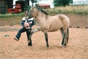 ćwiczymy z końmi