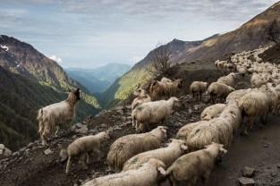 Przełęcz Abano, 2 950 m.n.p.m. - najwyżej położona przejezdna przełęcz w Gruzji.