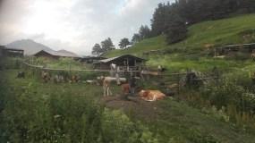 Miejsce wytwarzania tuszetyńskiego sera.
