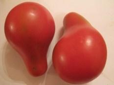 PARADIŽNIK KRIMSKA ROŽA: stara ukrajinsko/ruska sorta daje lepe hruškaste rdeče plodove srednje velikosti (do 8 cm dolžine). Rastlina v ugodnih pogojih zraste 1-1,5 m visoko in razvije močno in debelo steblo, ki zmore nositi veliko plodov. Vseeno potrebuje oporo (kol). Gojenje te sorte ni zahtevno, rastline so povečini zdrave in dobro obrodijo. Ne potrebuje posebne nege, razen zalivanja v tla v sušnih obdobjih (tako kot vsi paradižniki je tudi Krimska roža občutljiva na pomanjkanje vode). Paradižnike sadimo tako, da zasujemo steblo do prvih listov. Iz zasutega stebla bodo pognale korenine, zaradi česar bo rastlina bolj stabilna in bolje nahranjena. Sadimo jo na razdaljo od 70 do 100 cm. Dobri sosedje: amarant, janež, boreč, bazilika, zelena, rdeča pesa, črna redkev, česen, kapucinka, geranija, fižol, žajbelj, kopriva, kolerabica, kozmos, čebula, melisa, korenje, meta, ognjič, origano, peteršilj, petunija, por, radič, redkvica, glavnata solata, listnata solata, šparglji, špinača, timijan, drobnjak. Slabi sosedje: brokoli, cvetača, grah, jagode, ohrovt, brstični ohrovt, koromač, koper, kolerabica, kumare, krompir, koruza, zelje, mačja meta, marelica, oreh, paprika, jajčevec, repa, rožmarin.