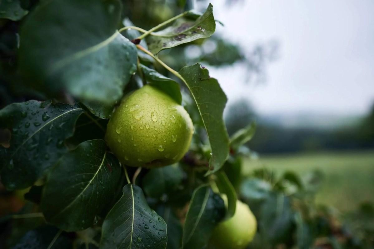 Wasserkreislauf Birnenbauen