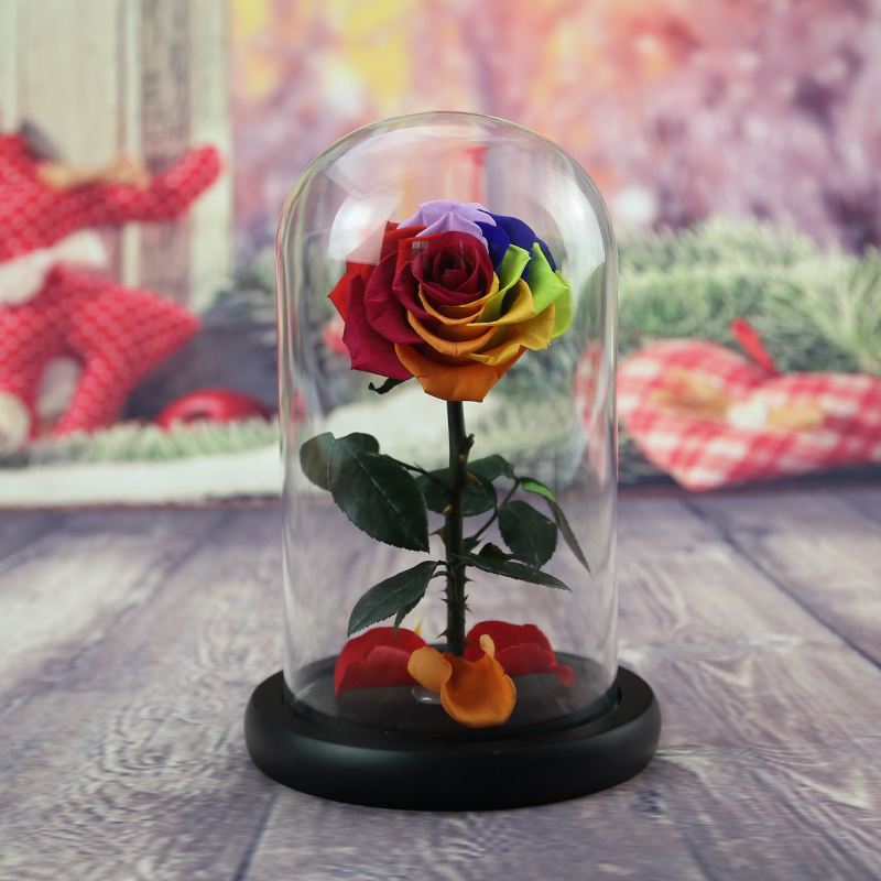 Preserved Rose Beauty And The Beast With Glass Dome Last 1 10 Years