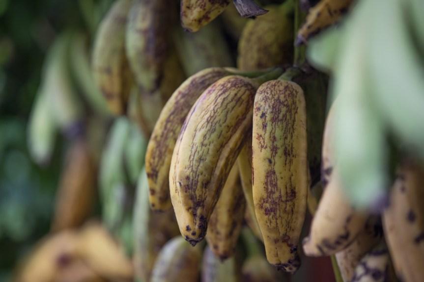 banano_colombia