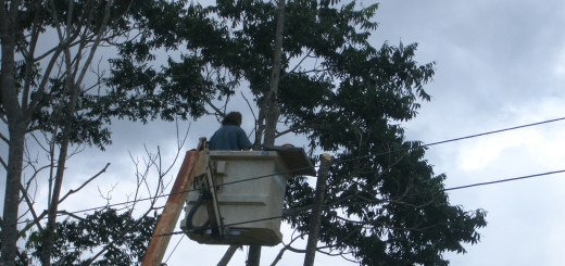 Tom Kendall on the cherry picker, doing a job for more than one purpose