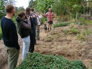 Introduction to Permaculture course