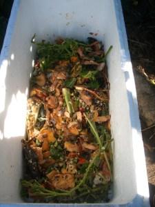 Worm farm with scraps