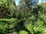 This path takes you alongside the Food Forest on the right and banana trees on the left.