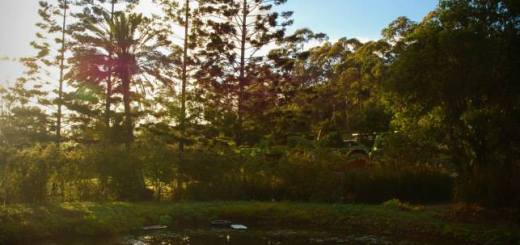 Permaculture Design Certificate (PDC) course September 2014 at PRI Sunshine Coast
