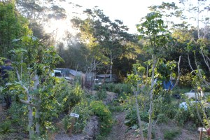 The kitchen garden at Maungaraeeda, during the PDC with Tom Kendall