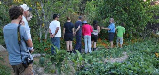 Permaculture Design Certificate at the Permaculture Research Institute Sunshine Coast