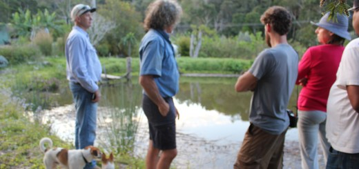 The swimming pond, PDC at Maungaraeeda with Tom Kendall, Sunshine Coast, Queensland