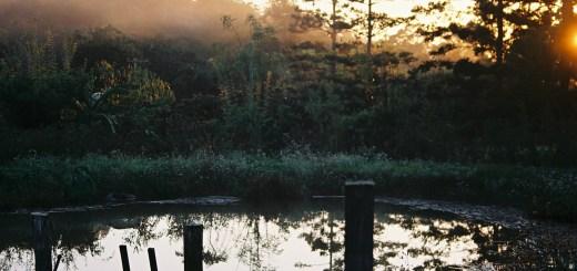 Morning glory: the pond at Maungaraeeda
