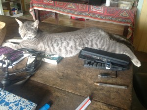 The cat owns the place at Maungaraeeda, Permaculture Sunshine Coast