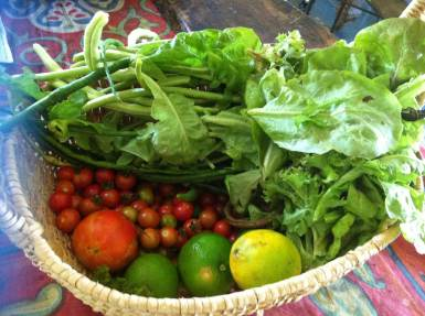 Garden harvest on our permaculture property on the Sunshine Coast