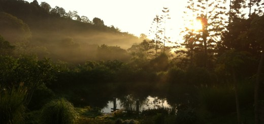 Sunrise at Maungaraeeda, our permaculture farm on the Sunshine Coast