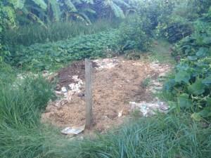 Tom Kendall creates a new sweet potato bed at Maungaraeeda.