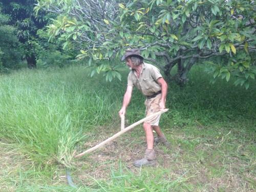 Tom Kendall uses a scythe at Maungaraeeda on the Sunshine Coast.
