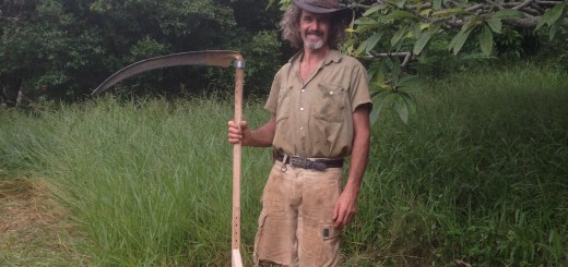 Tom Kendall with his scythe at Maungaraeeda.