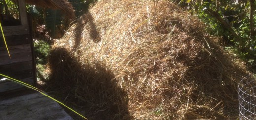 Tom Kendall stores mulch for leaner times at Maungaraeeda.