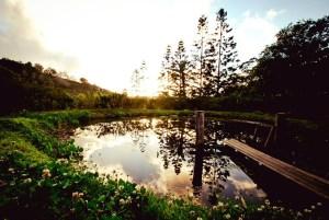 Swimming pond at PRI Sunshine Coast