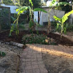Banana circle and pathway laid, urban location