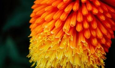 fiore arancione e giallo