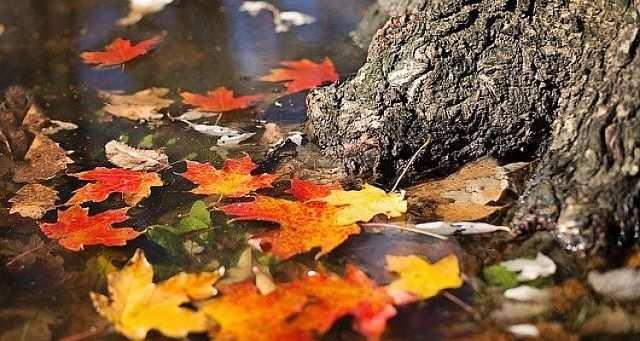 Καλό μήνα! Γιατί ο Νοέμβριος ονομάζεται κρασομηνάς, Αρχαγγελίτης και  Αγιομηνάς; – permissos.gr