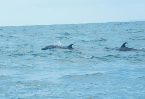 boat trip dolphins