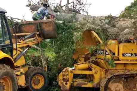 Tragédia: operador de máquina morre esmagado por árvore