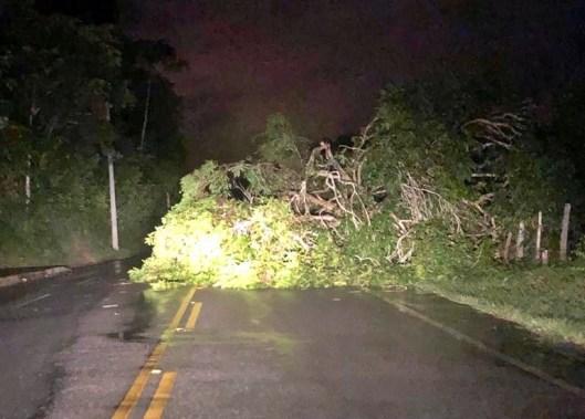 PERIGO: Ventos fortes derrubam árvores sobre PE-71 em Chã Grande; motoristas estão em alerta