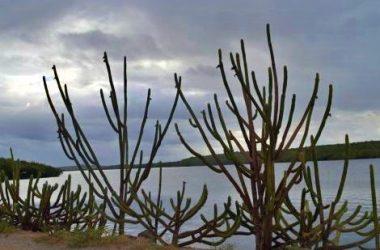 APAC alerta para baixa umidade do ar no interior de Pernambuco; calor terá 36 graus