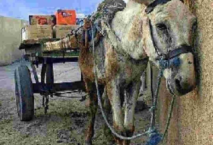 MPPE convida população para discutir uso de veículos de tração animal