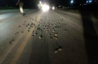 Bandidos explodem presídio de Limoeiro e resgatam detentos