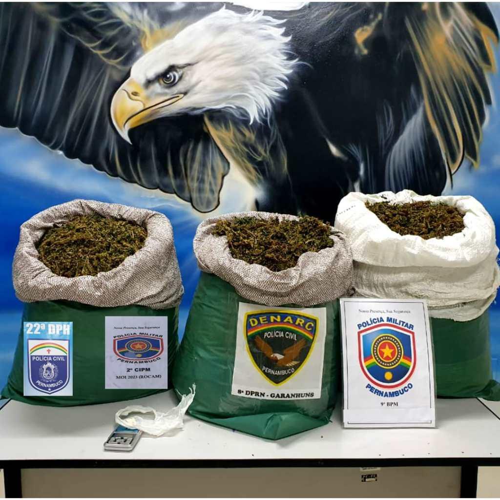 Em operação conjunta, policiais apreendem 31kg de maconha