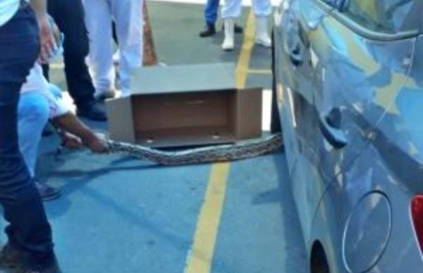 Cobra é capturada em estacionamento de supermercado em Caruaru