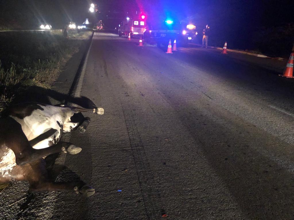 Moto bate em animal na BR-232, em Caruaru, e casal morre