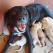PMs resgatam cachorrinhos recém-nascidos no agreste de Pernambuco