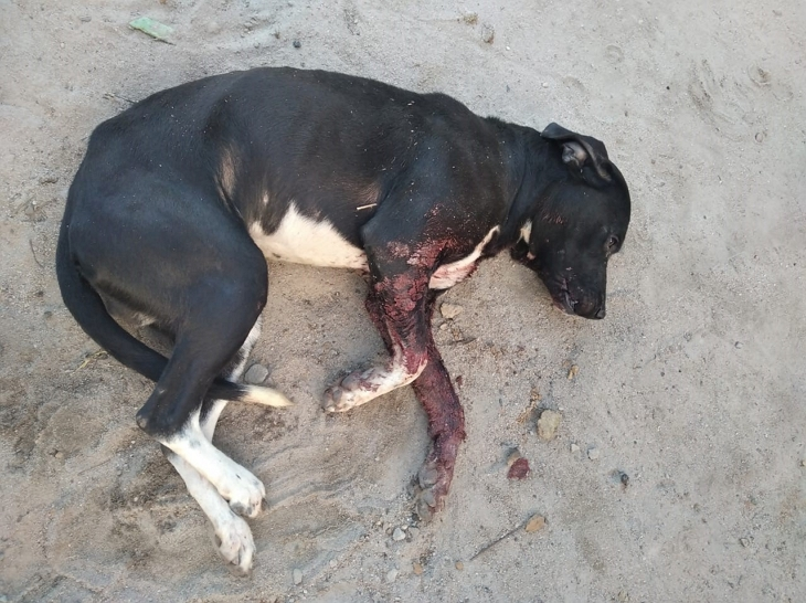 idoso preso atirou em cachorro lajedo agreste violento 1