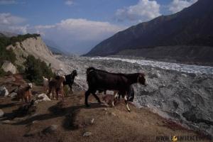 Nie da się też iść główną ścieżką, bo kozy i owce wydeptały tu ich dziesiątki. (Fot. www.loswiaheros.pl)