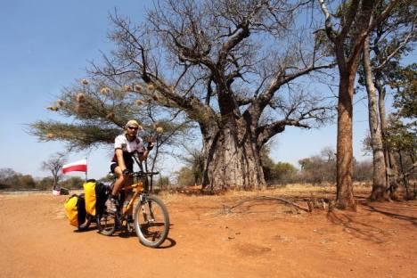 Droga prowadzi wśród potężnych baobabów. (Fot. Piotr Strzeżysz)