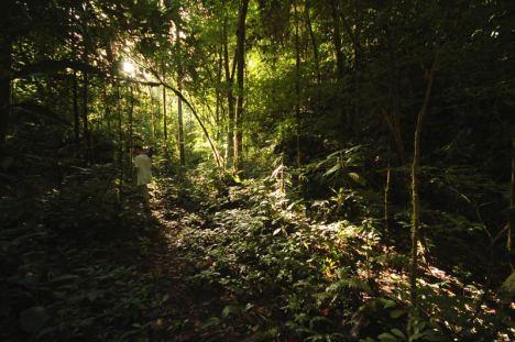 Selva Central. Przez gęste poszycie przedzierają się ostatnie promienie słońca. (Fot. Joanna M. Chrzanowska)