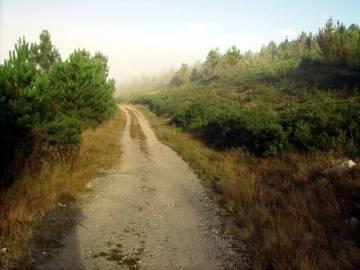 Camino de Santiago - w drodze