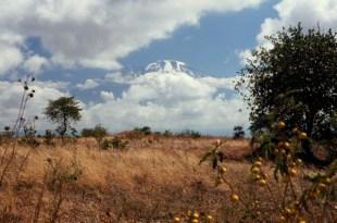 Kilimandżaro to jeden z najwyższych samotnych masywów na świecie. (Fot. M.Kruczyk)
