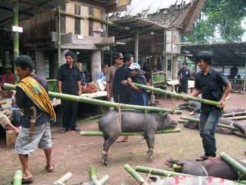 Indonezja. Liczenie zwierząt ofiarowanych rodzinie przez gości pogrzebu.