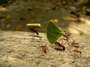 Gigantyczne mrówki w Parku Tyrona. (Fot. Dorota Muszyńska)