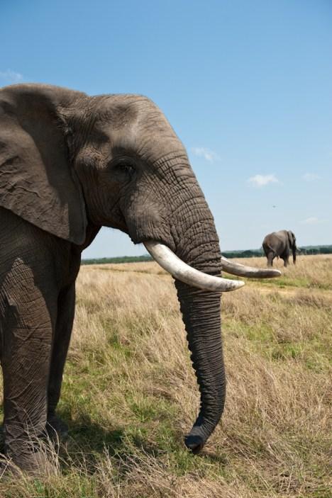 To, czego doświadczyliśmy w Afryce i czego byliśmy świadkami było smutne i przygnębiające. Rezerwat Imire, Zimbabwe (Fot. Tomek Michniewicz)