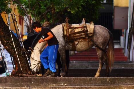 Koń to normalny widok na ulicach Bogoty.